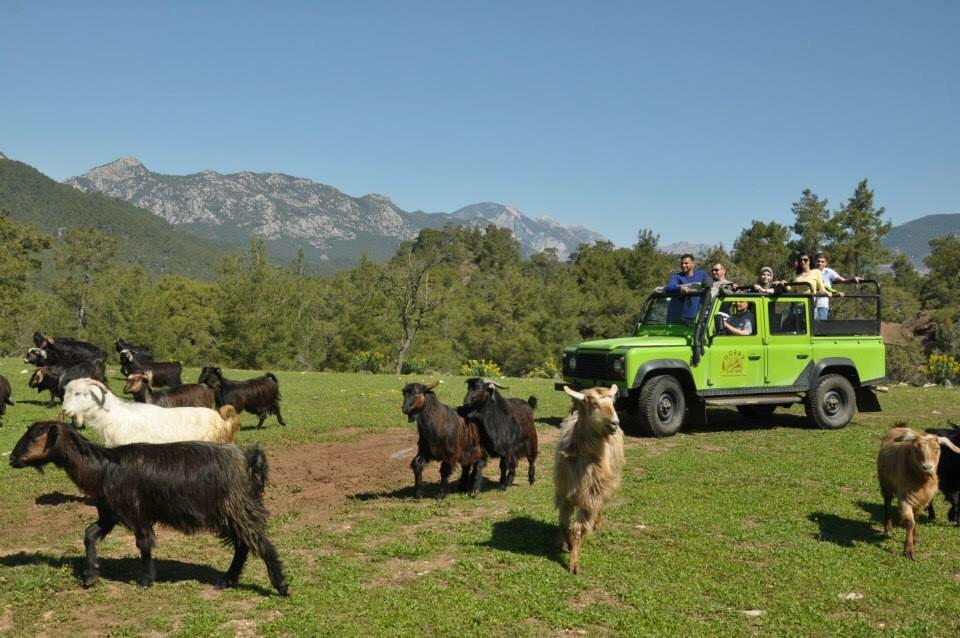 Jeep Safari